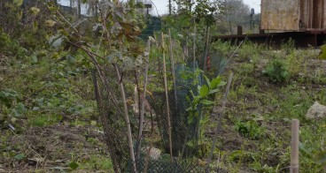 canopee_reforestation (4)