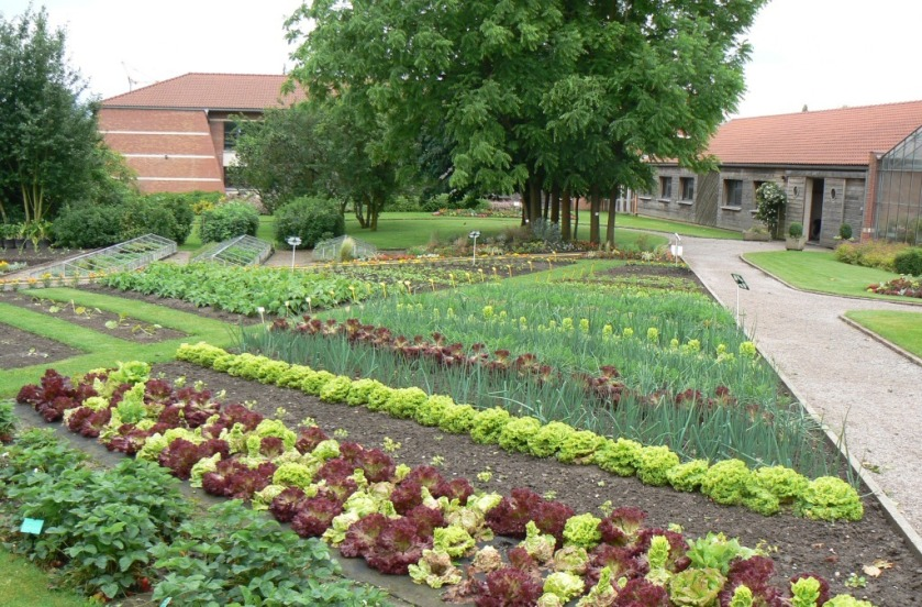 potager_traditionnel